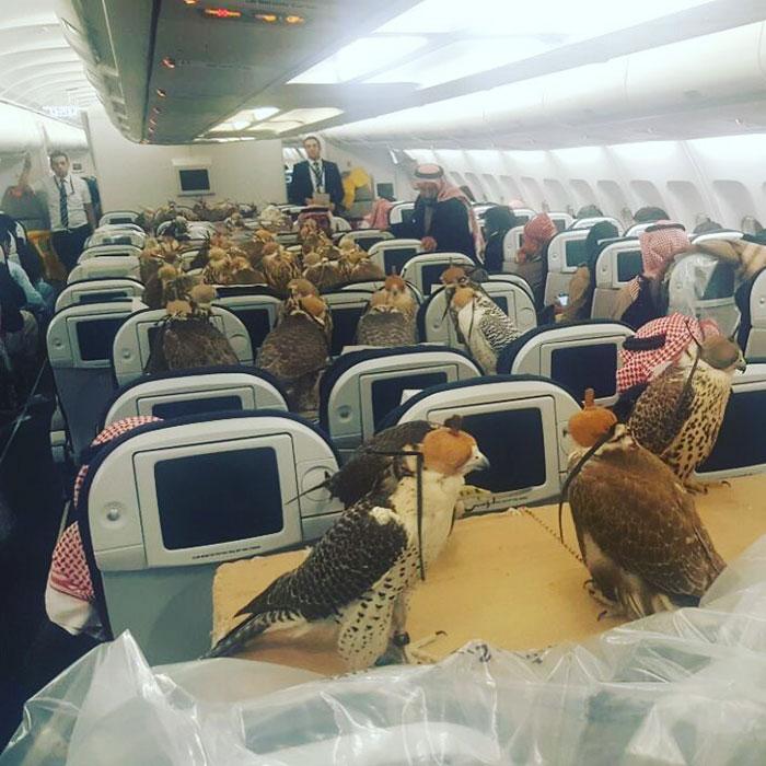 80-falcons-on-plane-saudi-prince-1