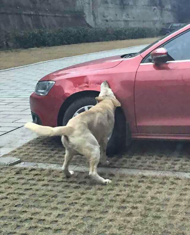 man-kicks-a-dog-dog-comes-back-with-friends-and-destroys-his-car-while-hes-away-3