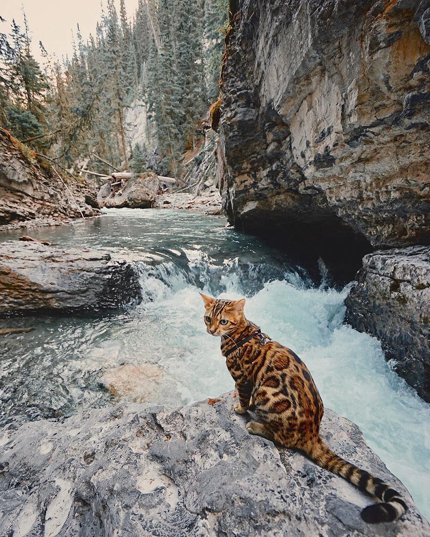 Картинки по запросу suki cat