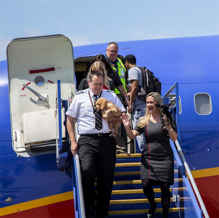 orphan-dogs-cats-rescued-southwest-airlines-harvey-texas-16-59b27dbf29676__700