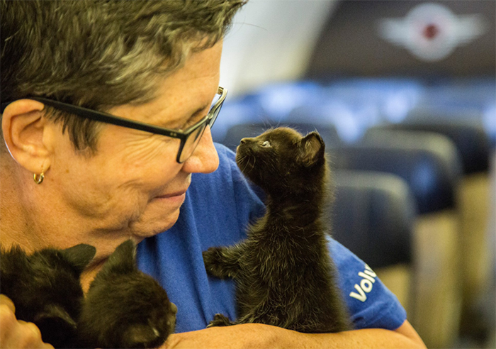 orphan-dogs-cats-rescued-southwest-airlines-harvey-texas-2-59b27d9d7e158__700