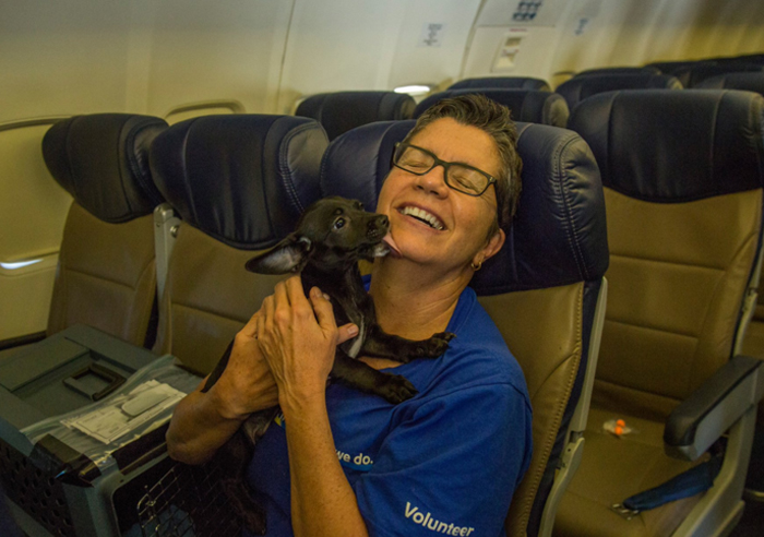 orphan-dogs-cats-rescued-southwest-airlines-harvey-texas-4-59b27da37b5eb__700