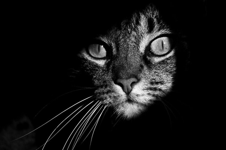 mysterious-cats-photography-10