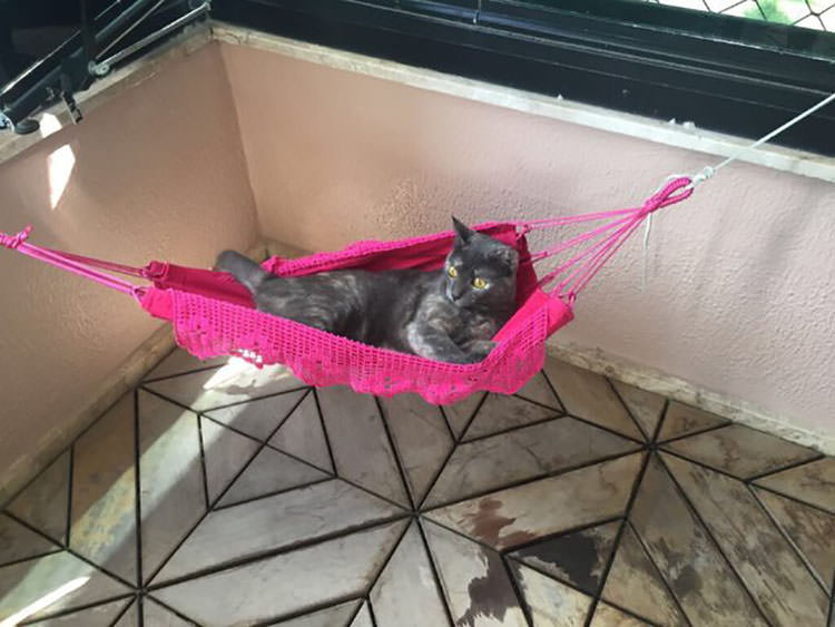 cat-gets-tiny-hammock-3