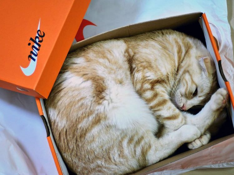 cats-in-boxes-03