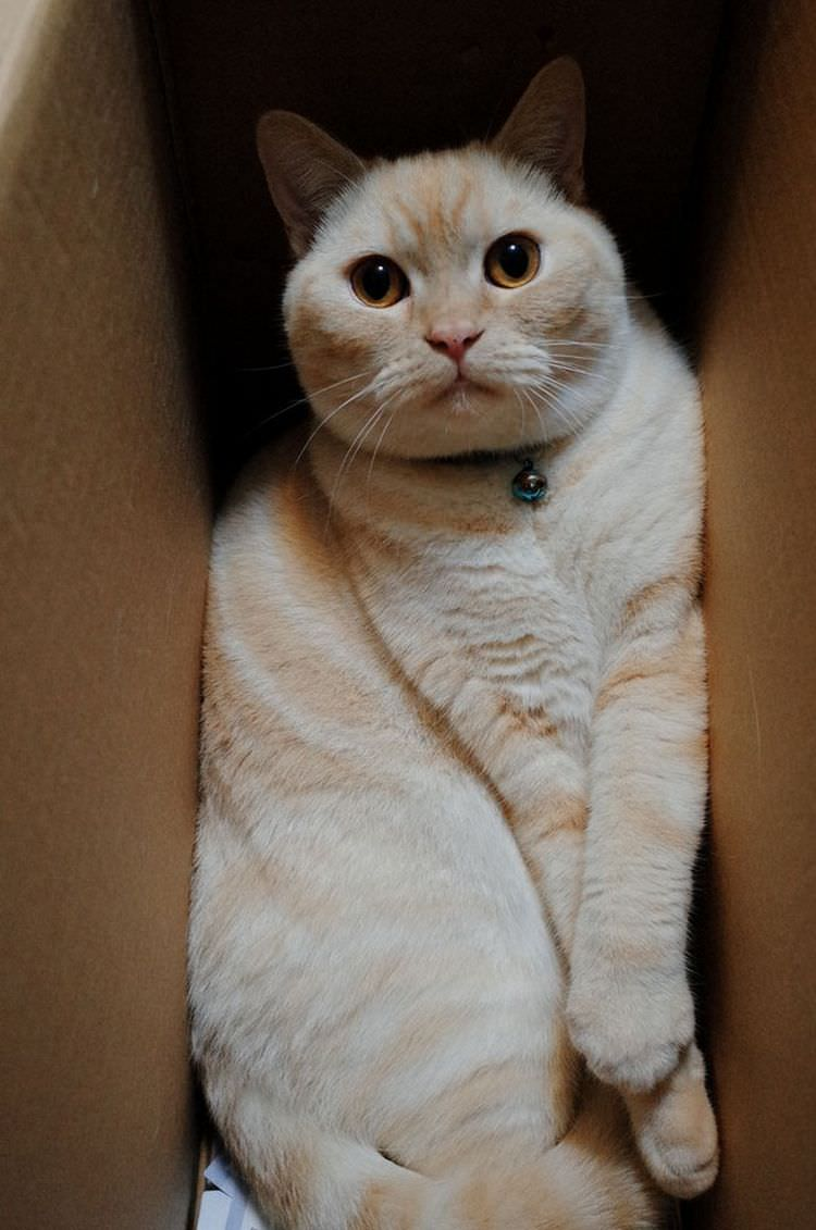 cats-in-boxes-04