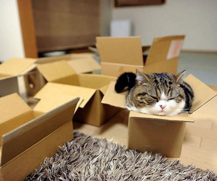 cats-in-boxes-06