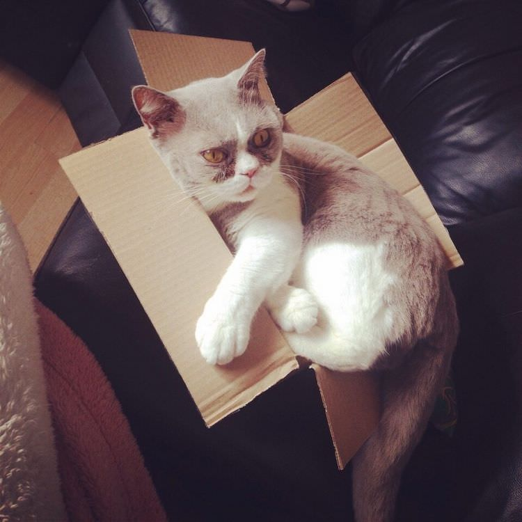 cats-in-boxes-07