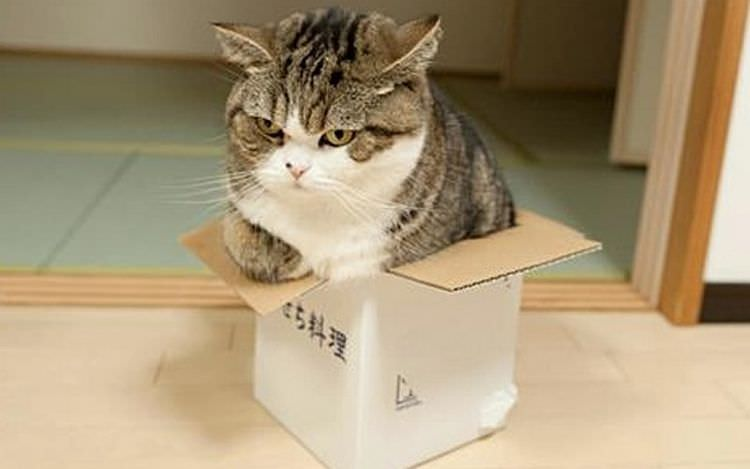 cats-in-boxes-08
