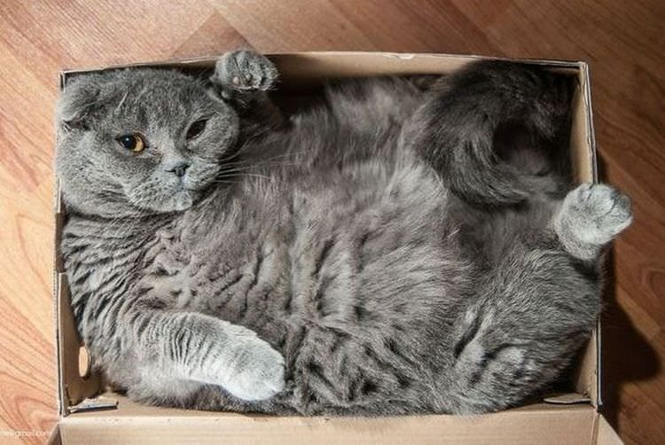 cats-in-boxes-10