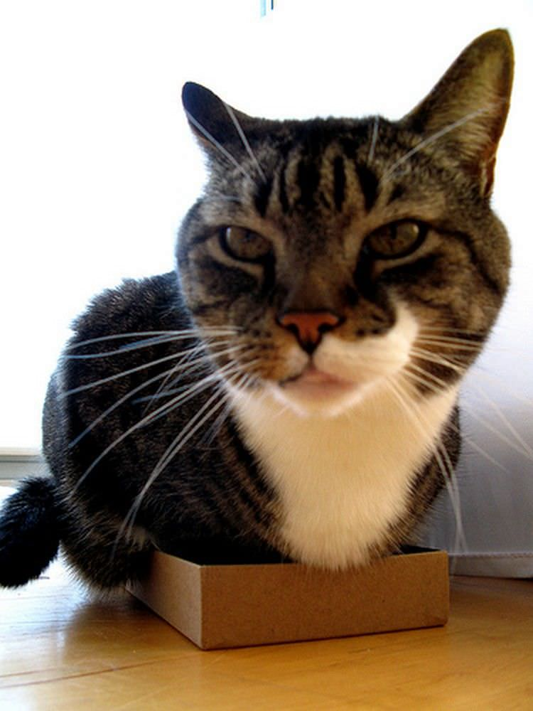 cats-in-boxes-11