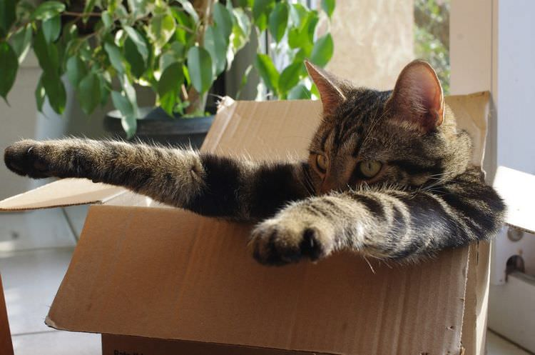 cats-in-boxes-12