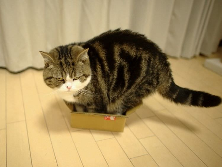 cats-in-boxes-13